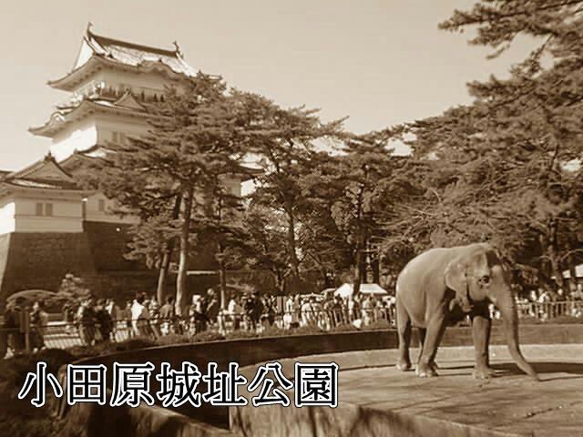 昔の小田原 小田原動物園
